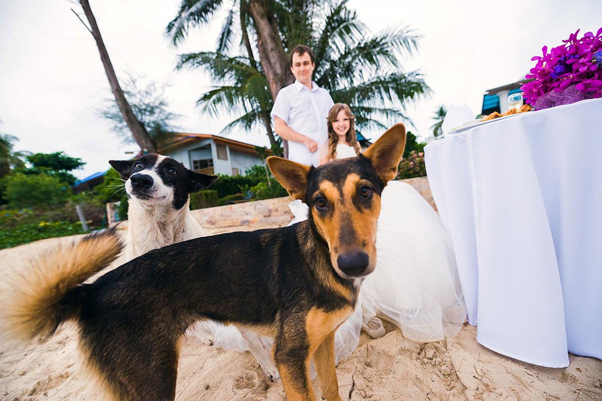 свадебная фотосессия с животными фото 11