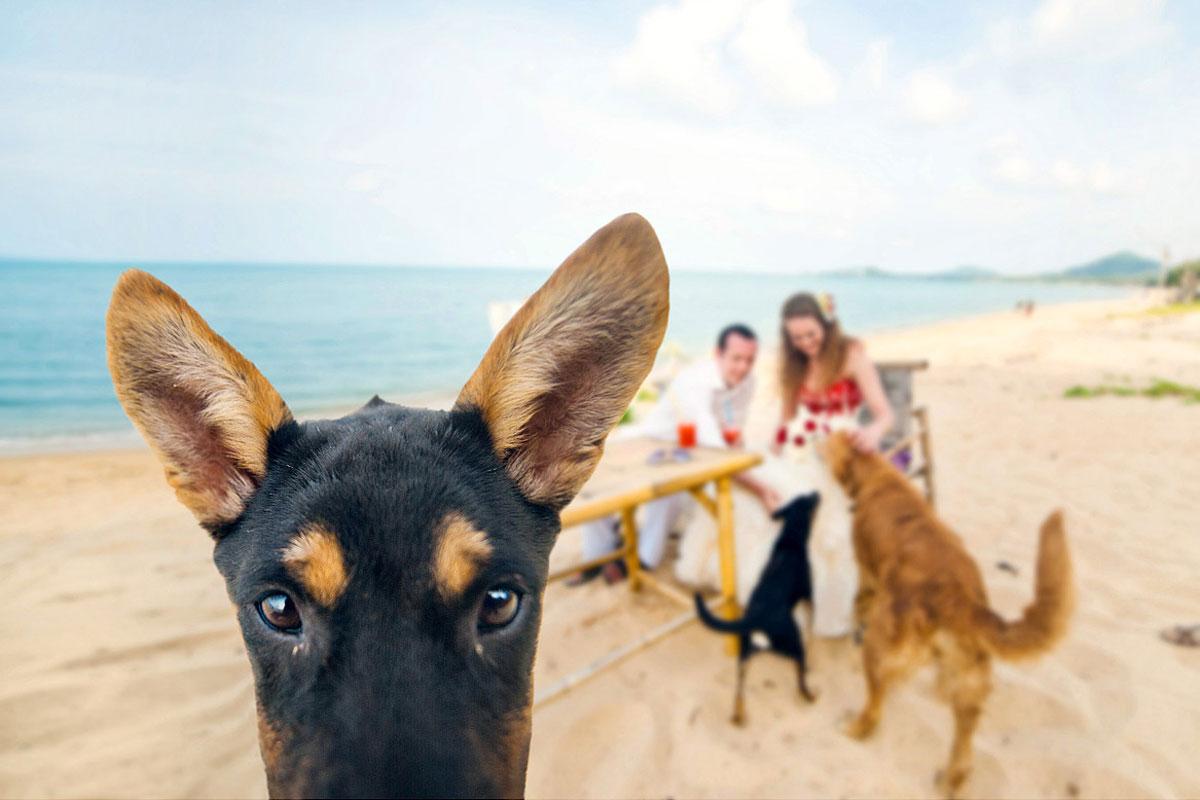 свадебная фотосессия с животными фото 9