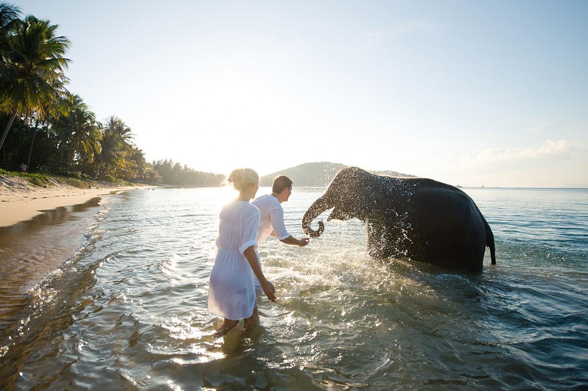 свадебная фотосессия с животными фото 13