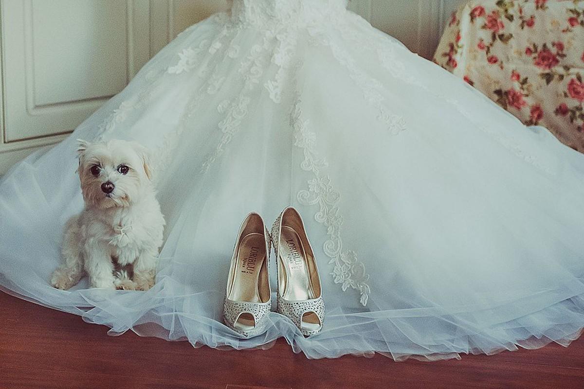 свадебная фотосессия с животными фото 5