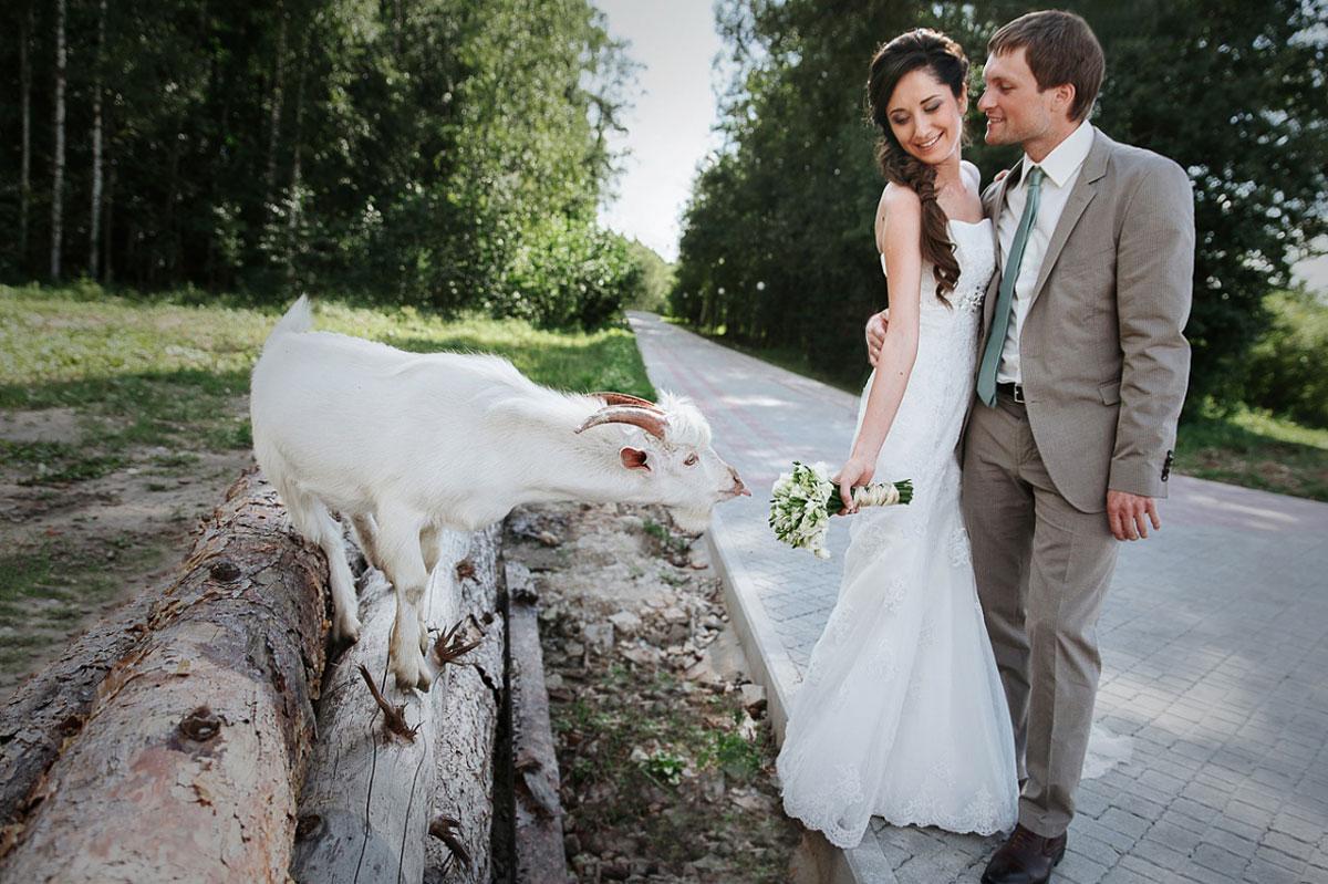 свадебная фотосессия с животными фото 20