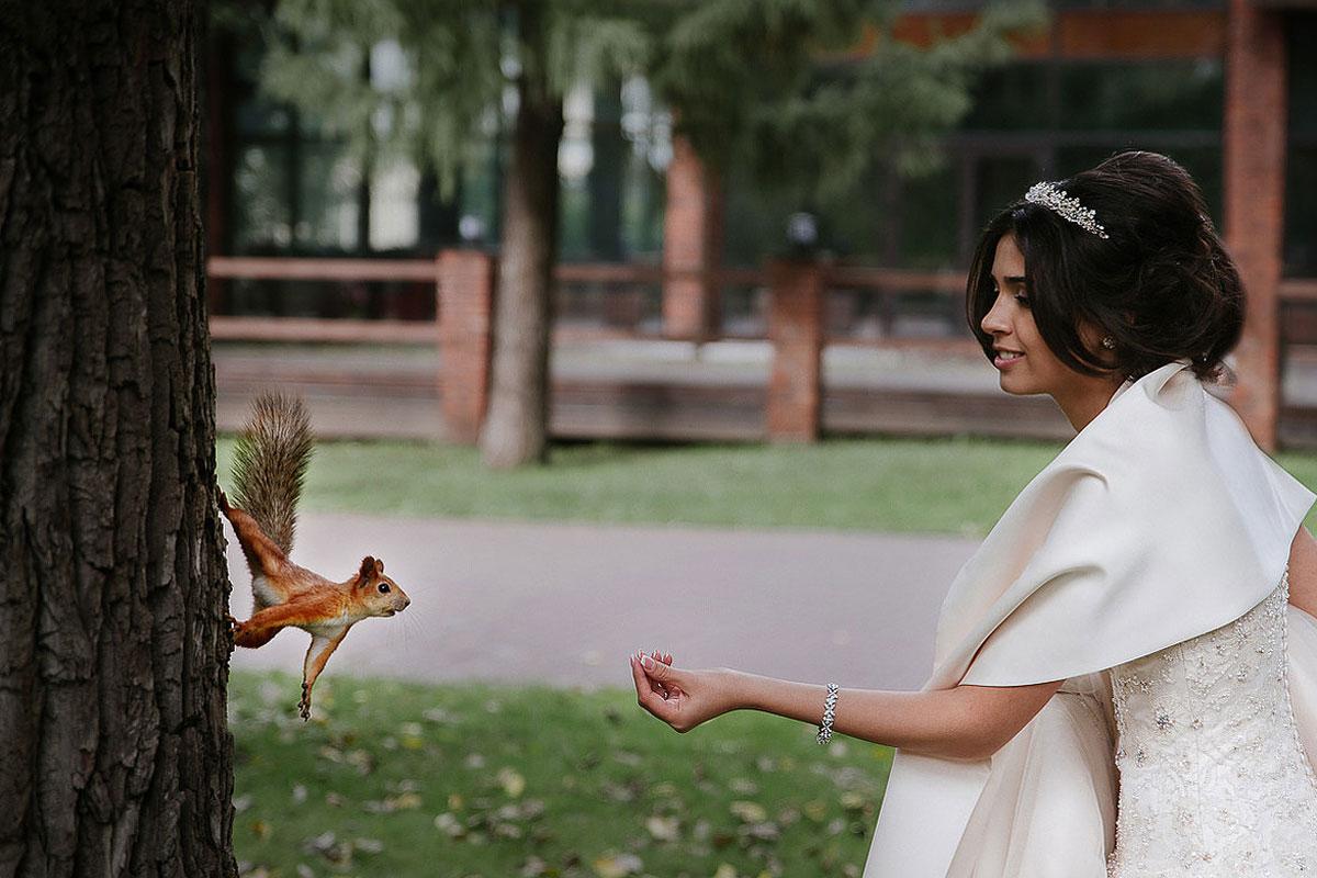свадебная фотосессия с животными фото 21