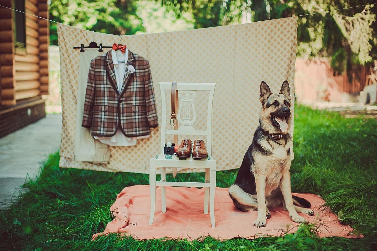 свадебная фотосессия с животными фото 3