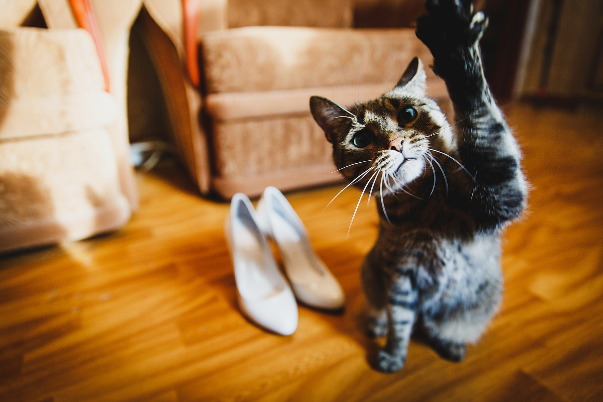 свадебная фотосессия с животными фото 8