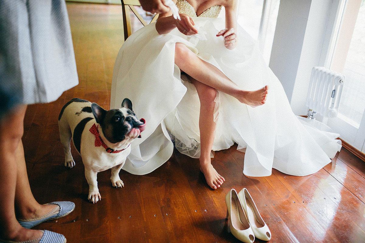 свадебная фотосессия с животными фото 7